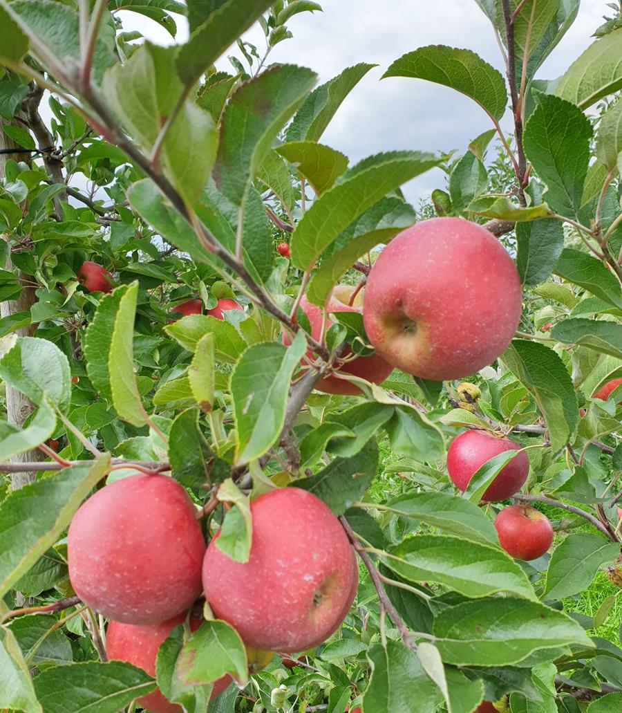Neue Obstgehölze